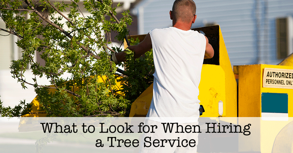 What to Look for When Hiring a Tree Service