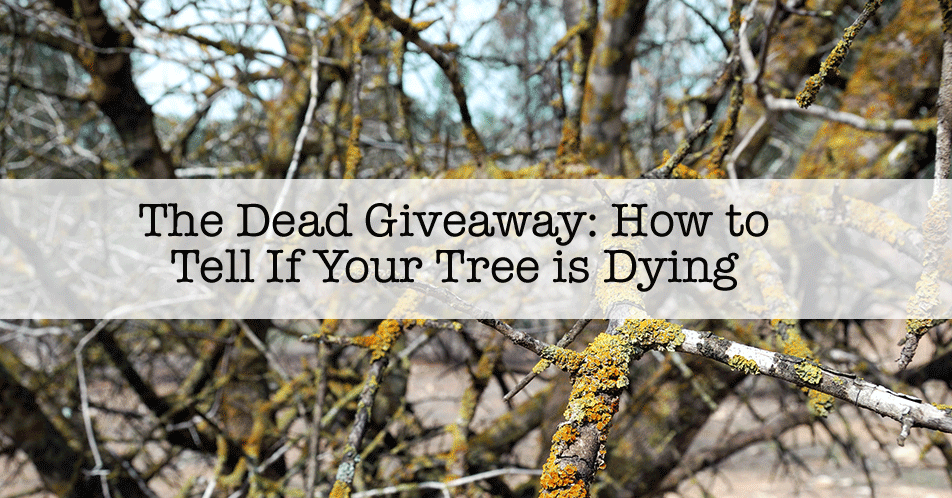 The Dead Giveaway: How to Tell If Your Tree is Dying
