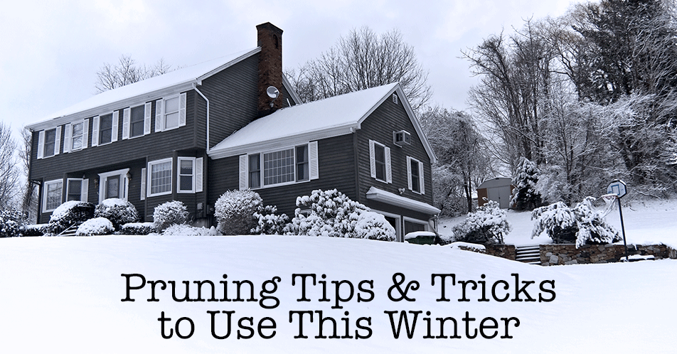 Pruning Tips & Tricks to Use This Winter